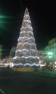 albero sorrento